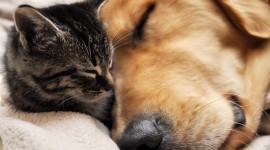 Cat And Dog Friendship Photo
