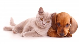 Cat And Dog Friendship Photo Download