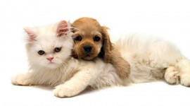 Cat And Dog Friendship Photo Free