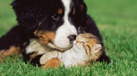 Cat And Dog Friendship Photo#1