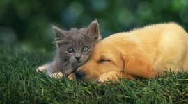 Cat And Dog Friendship Wallpaper 1080p