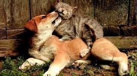 Cat And Dog Friendship Wallpaper Download