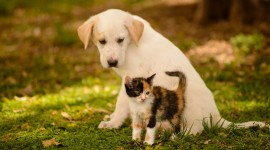 Cat And Dog Friendship Wallpaper Free