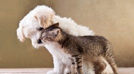Cat And Dog Friendship Wallpaper Full HD