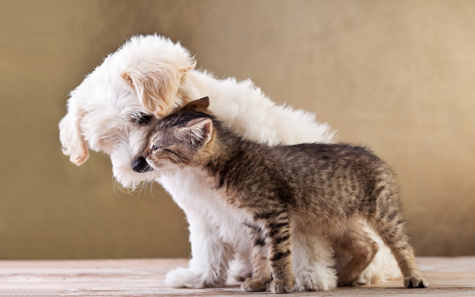 Cat And Dog Friendship Wallpapers High Quality Download Free