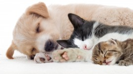 Cat And Dog Friendship Wallpaper HQ