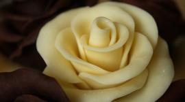 Chocolate Roses Wallpaper For Desktop