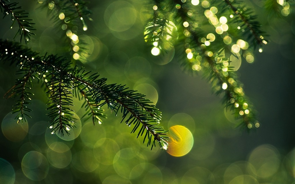 Christmas Tree Needles wallpapers HD