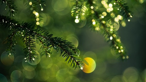 Christmas Tree Needles wallpapers high quality