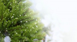 Christmas Tree Needles Wallpaper HQ#1