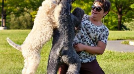 Dog Kerry Blue Terrier Photo