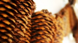 Garland Of Cones Wallpaper For Mobile#1