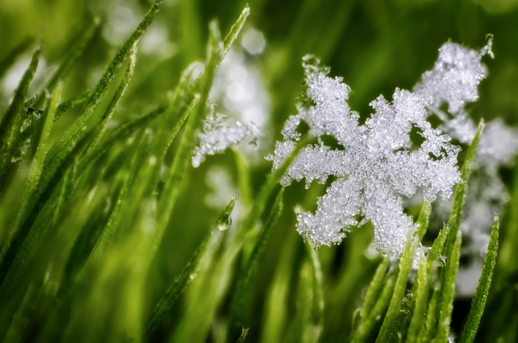 Grass In The Snow wallpapers HD