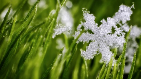 Grass In The Snow wallpapers high quality