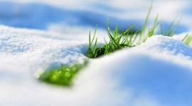 Grass In The Snow Wallpaper 1080p