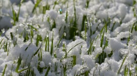 Grass In The Snow Wallpaper Download