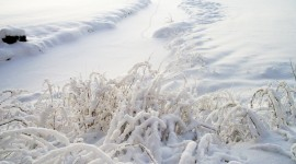 Grass In The Snow Wallpaper For PC