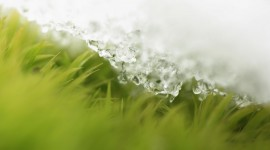 Grass In The Snow Wallpaper Free