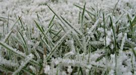 Grass In The Snow Wallpaper HQ