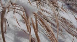 Grass In The Snow Wallpaper HQ#1