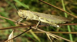 Locusts High Quality Wallpaper