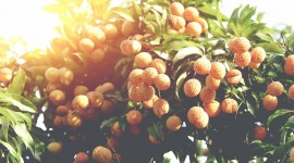 Lychees Wallpaper Download Free