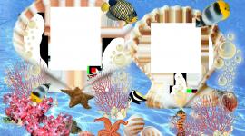 Marine Frame Desktop Wallpaper For PC