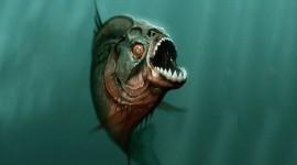 Piranhas Desktop Wallpaper HD