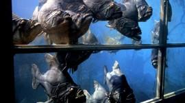 Piranhas Image Download