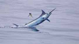 Sea Fishing Wallpaper 1080p