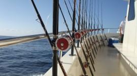 Sea Fishing Wallpaper