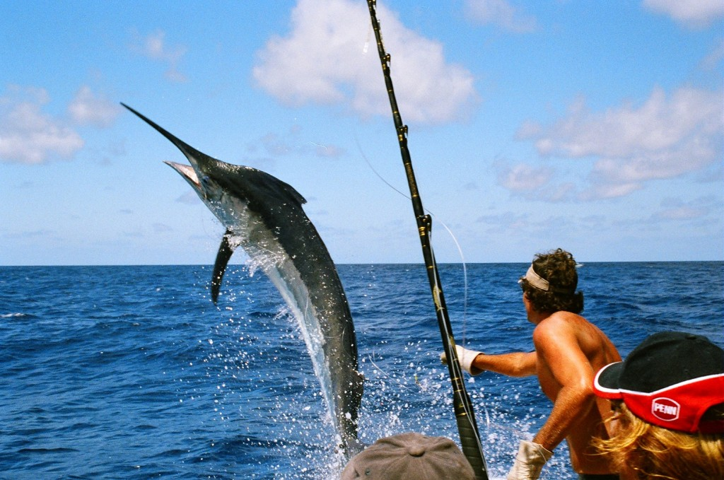Sea Fishing Wallpapers High Quality Download Free