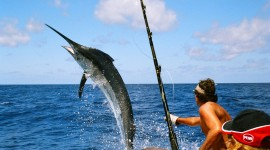 Sea Fishing Wallpaper Background