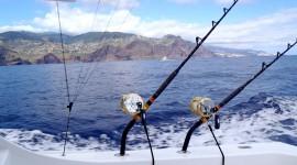 Sea Fishing Wallpaper Download Free