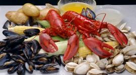 Seafood High Quality Wallpaper