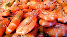 Seafood Wallpaper High Definition