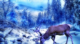 Seasons Greetings Photo Free