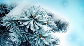 Snow Macro Best Wallpaper