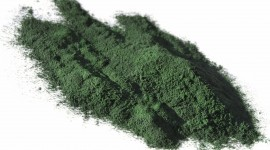 Spirulina Wallpaper Download Free