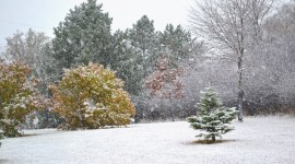 The First Snow Photo Free#2