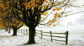 The First Snow Wallpaper