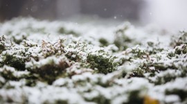 The First Snow Wallpaper Gallery