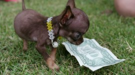 The Smallest Dog Wallpaper Download