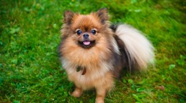 The Smallest Dog Wallpaper Download Free