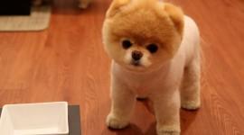 The Smallest Dog Wallpaper For Desktop