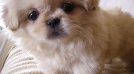 The Smallest Dog Wallpaper Free