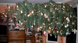 Unusual Christmas Trees Photo