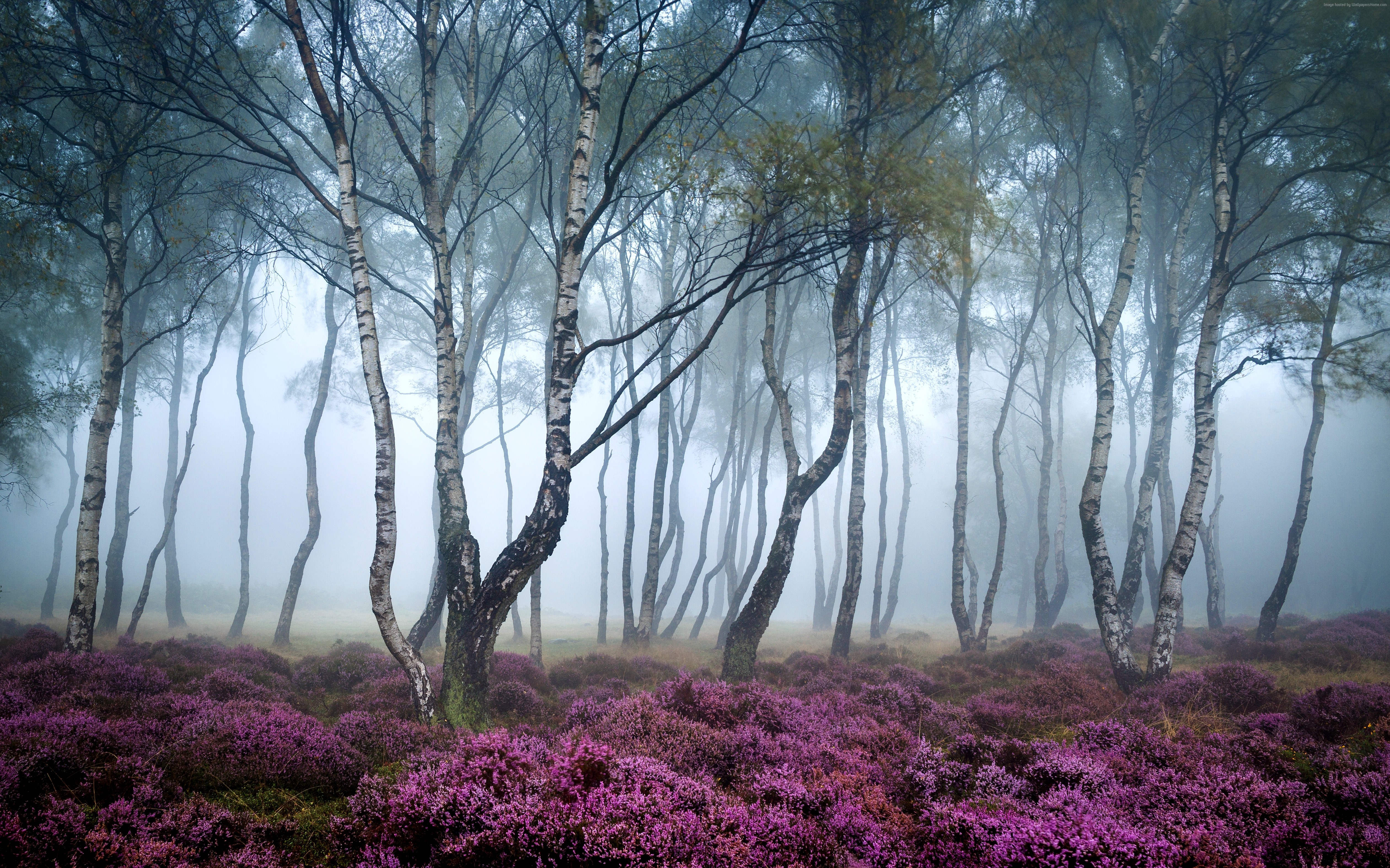 4k Forest Wallpapers High Quality Download Free
