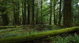 4K Forest Photo Download#2
