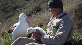 Albatross Photo Download